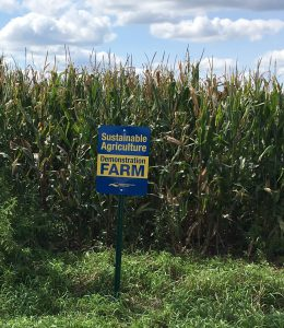 Farm participating in cover crops grant